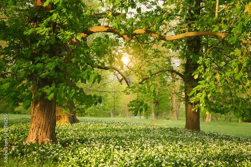 Zdjęcia na płótnie, fototapety na wymiar, obrazy na ścianę : Sunlight in the green forest springtime
