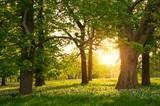 Fototapety Sunlight in the green forest springtime