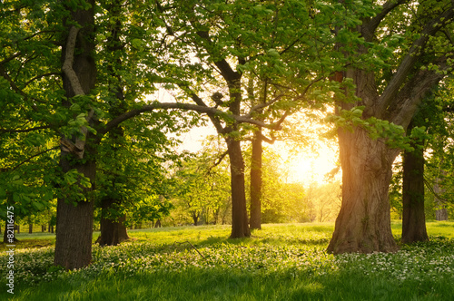 Poster Bossen Sunlight in the green forest springtime