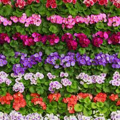 Spring flower.  flower background
