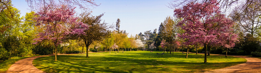 Beautiful park garden in spring.  Spring panorama in park