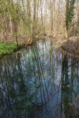 Reflets d'arbres sur le point d'eau