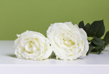 White rose on table in the bedroom