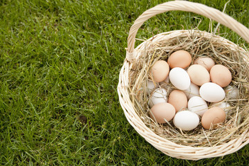 Basket of Eggs in the Grass