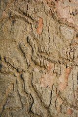 Close up texture rough of tree wood.