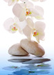 Massage Stones with white Orchid.