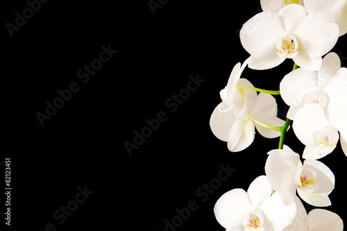 Foto op Canvas Orchidee White Orchid Branch.