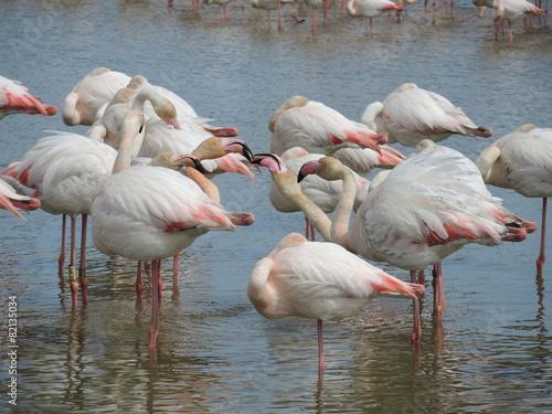 Foto op Aluminium Flamingo Baiser flamant