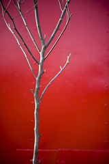 Tree Against Red Background