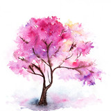 Single cherry sakura pink tree isolated
