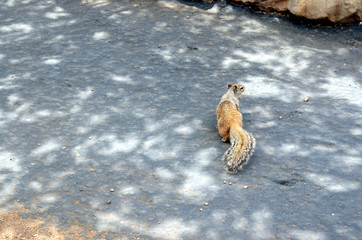 A little squirrel running around, Grand Canyon National Park, Ar