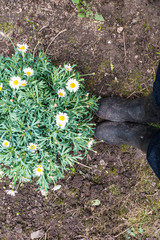 Margaret flower and boots on soil