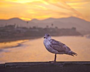 Seagull on Boardwalk Railing
