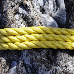 Rope Around a Tree Trunk