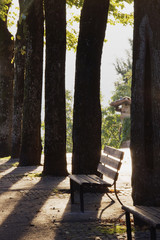 Trees and Bench