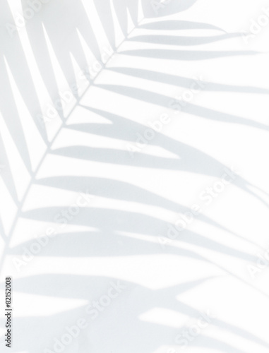 shadow of palm leaves - 82152008