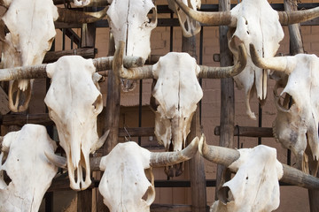 Close up of bull skulls with horns, Santa Fe, New Mexico, United States