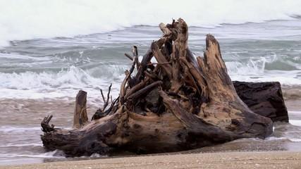 Albero sul bagnasciuga in balia delle onde