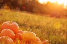 "Постер, картина, фотообои ""pumpkins outdoor"""