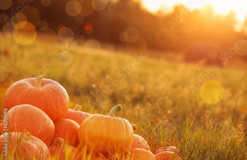 pumpkins outdoor Photo by Maya Kruchancova