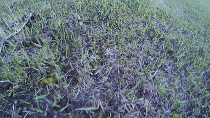 Grass on fire scene