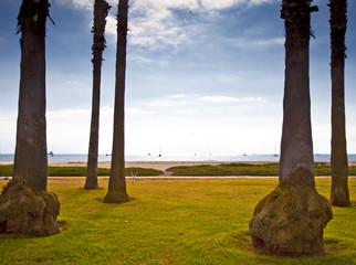 Palm Trees on Beach Lawn