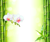 Fototapeta Bambus - white orchid with bamboo - beauty and spa background © Romolo Tavani
