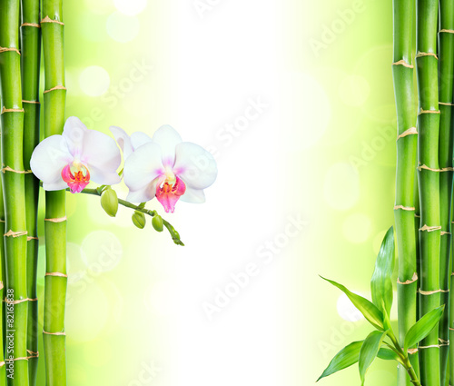 white orchid with bamboo - beauty and spa background - 82165838