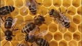Building instinct bees. poster