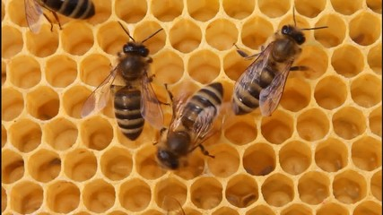 Bees convert nectar into honey and care for the larvae