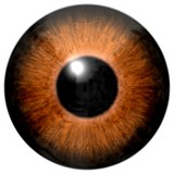 Fototapety Detail of eye with brown colored iris and black pupil