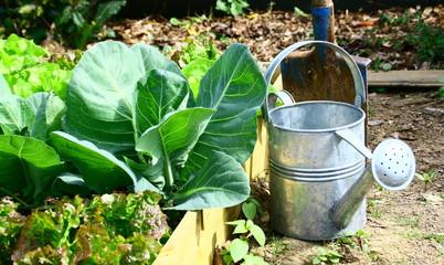 légumes dans carré potager et outils de jardinage