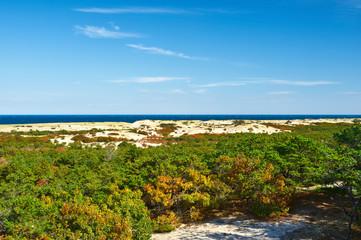Landscape at Cape Cod
