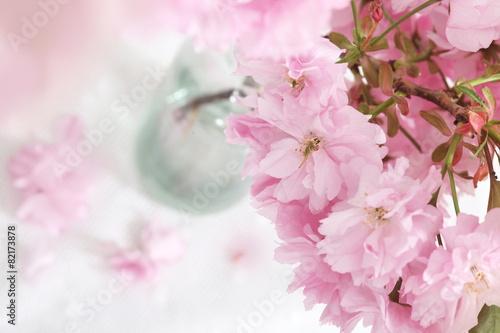 Foto op Canvas Lilac blooming