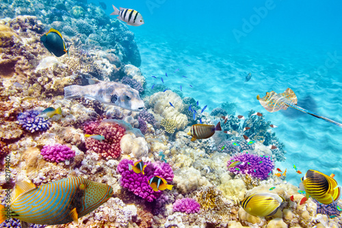 Underwater world with corals and tropical fish. - 82174402