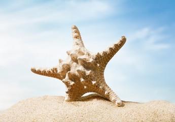 Florida. Starfish on a Beach
