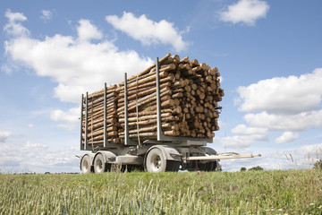 Logs stacked on trailer