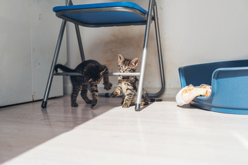 Two grey kittens playing on a metal chair