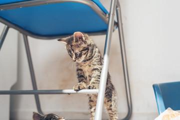 Little kitten standing on a chair