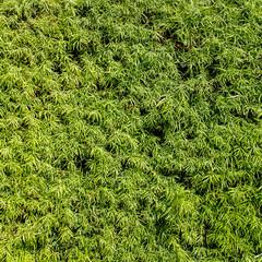 Green foliage wall