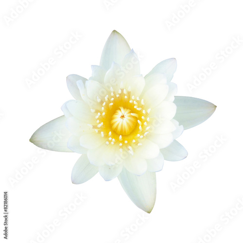 Aluminium Lotusbloem White lotus, isolated, clipping path included