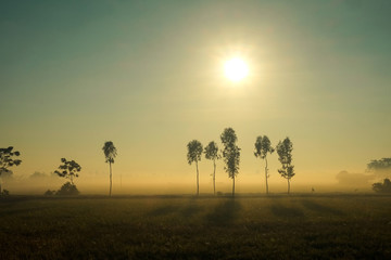 Rice field in the early morning fog, Hanoi, Vietnam
