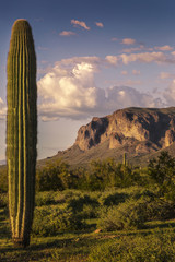 Suprestition Mountains and Saguaro Cactus at Sunset