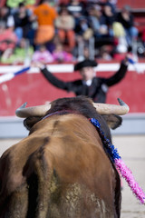 Closeup of the head of a bull and bullfighter background