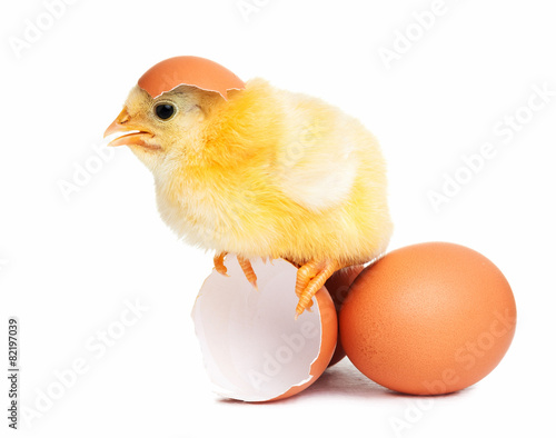 Foto op Canvas Kip Cute chick isolated with eggs