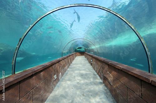 Aquarium Tunnel - 82197217