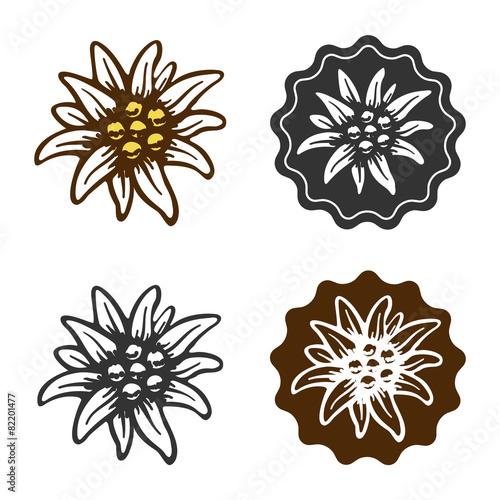 edelweiss flower symbol alpinism alps germany logo - 82201477