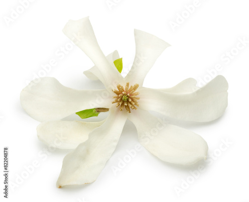 Tuinposter Magnolia magnolia flower isolated on a white background
