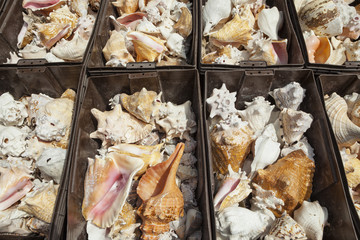 Bins of conch shells on a stall at Market 28