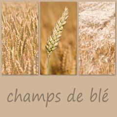 composition champs de blé